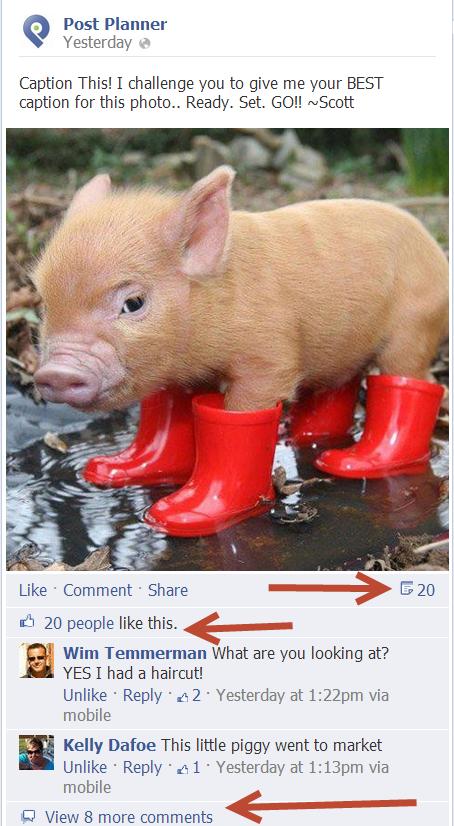 pigcaption