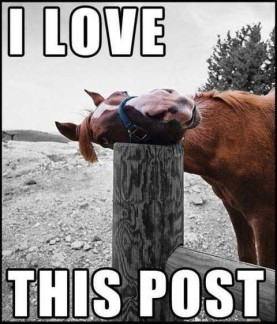 funny facebook comment pictures