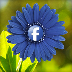 how to advertise your business on facebook