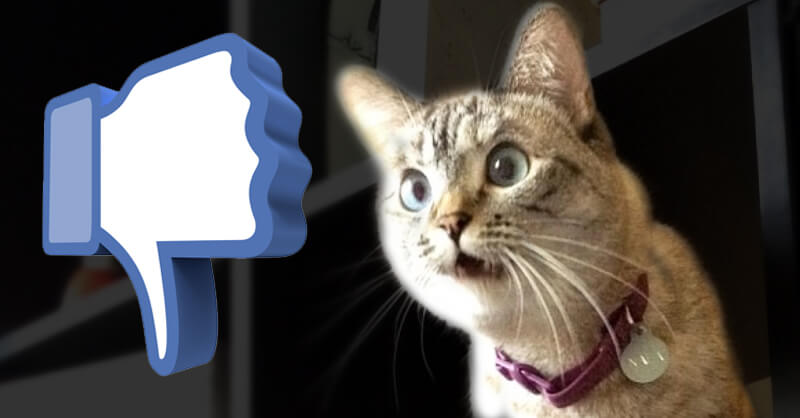 Holy Cats Facebook is Finally adding a DISLIKE Button! (Kinda)