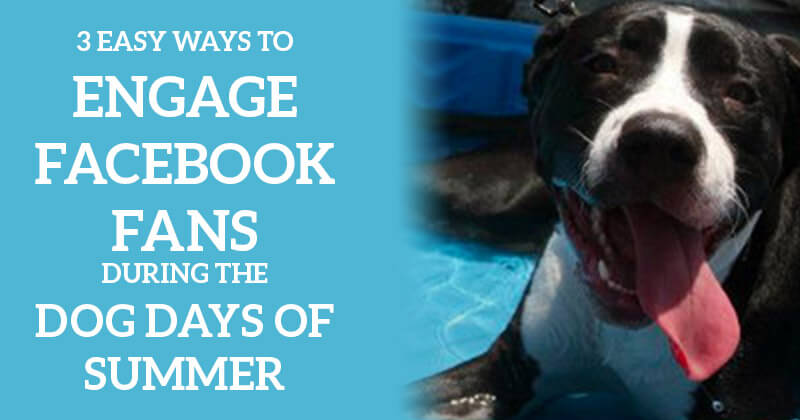 3 Easy Ways to Engage Facebook Fans During the Dog Days of Summer