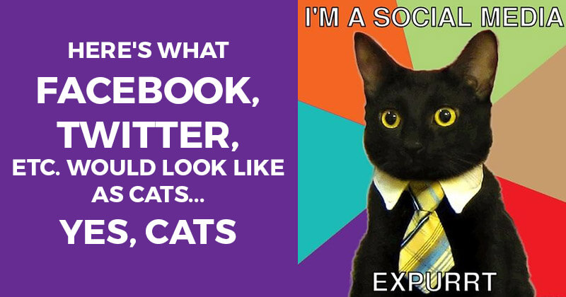 Here's What Facebook, Twitter, Etc. Would Look Like as Cats... Yes, CATS