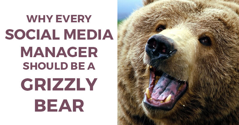Why Every Social Media Manager Should be a Grizzly Bear