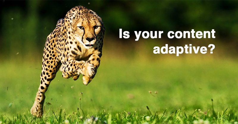 """Here's What the NEW Buzzword """"Adaptive Content"""" Means for Your Blog & Business"""